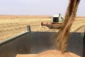 فلاحو العراق يسوقون أكثر من مليوني طن من الحنطة خلال العام الحالي